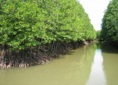 Vì sao tôm khô Cà Mau là loại tôm ngon nhất Việt Nam?